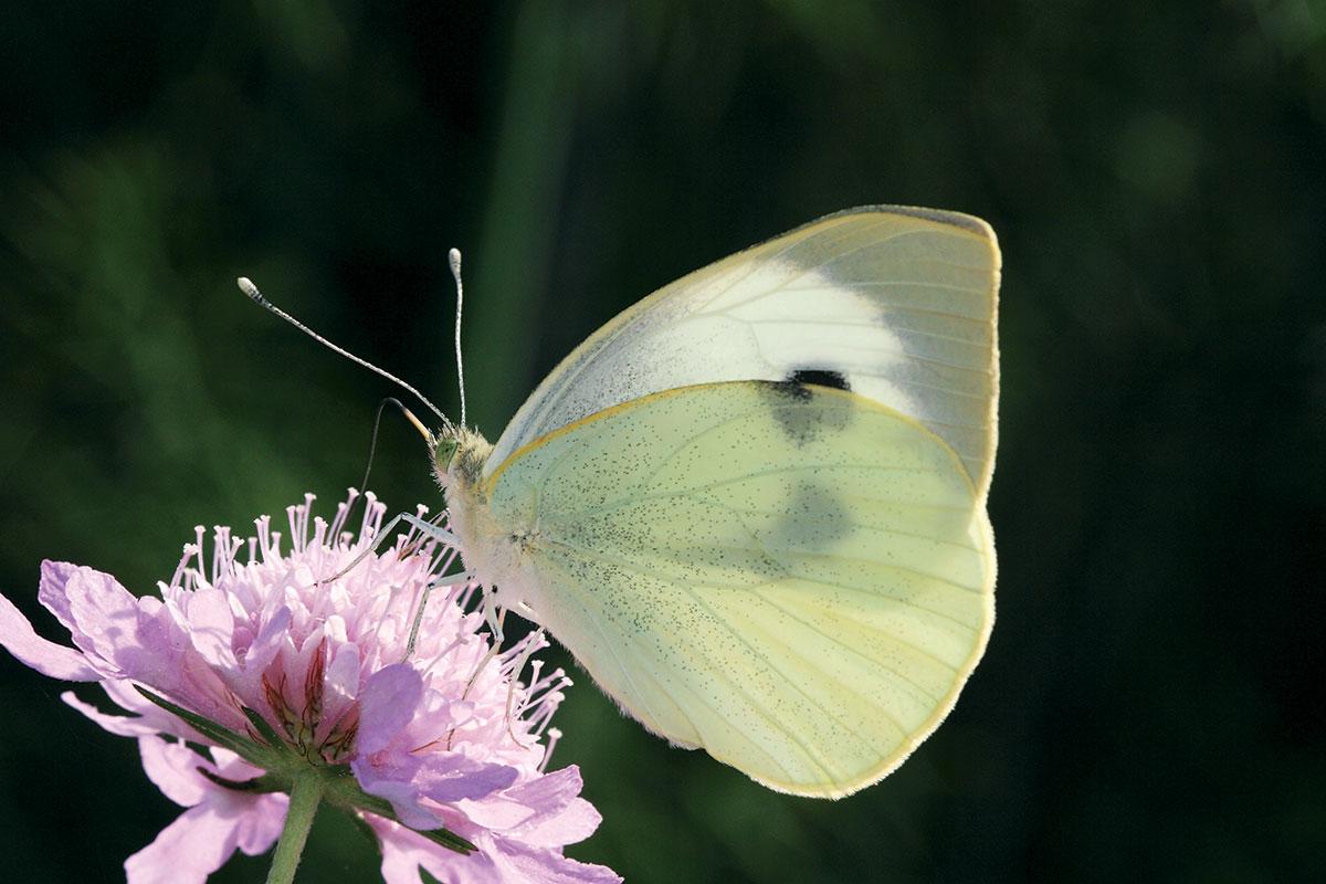 Senza farfalle quando incontri